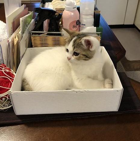 箱の中のネコ