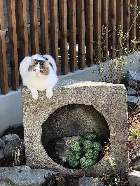 ネコが飛び回れる家